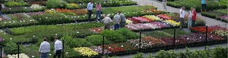are you a leading grower of ornamental plants