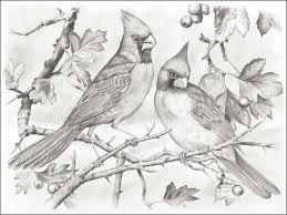 cardinal coloring pages imagixs drawing pinterest gekimoe u2022 103588
