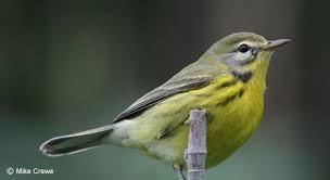 Nj Backyard Birds by Cape May Bird Observatory
