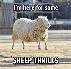 Smile Memes - 148 best memes images on pinterest meme memes and funny pics