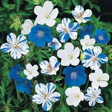 Summer Flowers For Garden - best 25 blue garden ideas on pinterest blue plants blue