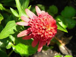 native plants to illinois walk2write in southern illinois