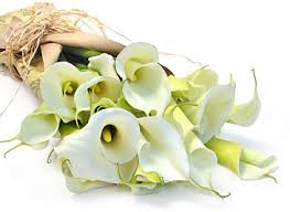 Calla Lily Flower Delivery - funeral flowerbud