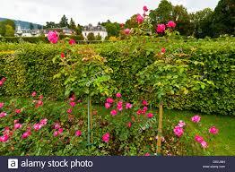 Blumen Baden Baden Lichtentaler Allee Baden Baden Stockfotos U0026 Lichtentaler Allee