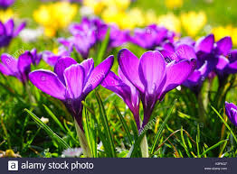 flower delivery near me flowers near me flower delivery stock photo 122661175 alamy