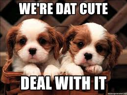 Meme Generator Deal With It - we re dat cute deal with it 2 cute puppies meme generator