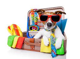 traveling with pets images Tips on traveling with pets by boundary fence and supply co jpg