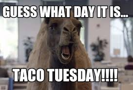 Taco Tuesday Meme - is tuesday really the best day for tacos jameystegmaier com