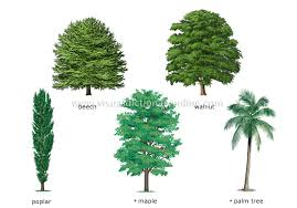 different types of trees names of trees and plants patio garden design