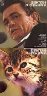 Cat Photo Album Famous Album Covers Recreated With Cats