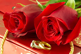 beautiful rose rings images Red roses and wedding rings on gift box photober free photos jpg