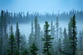Russian Boreal Forest Disturbance Maps by Fire Conservationbytes Com