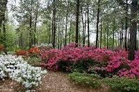 Botanical Gardens Dothan Alabama Explore Southern History Dothan Area Botanical Gardens Dothan