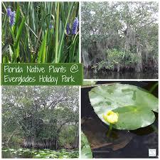florida native aquatic plants enjoy a florida adventure everglades holiday park airboat tours