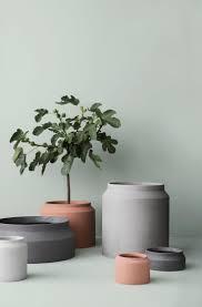 plants fancy plant pots images plant decorating home plant