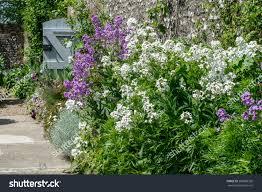 garden gate flowers stock photo 282868358 shutterstock