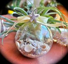 ornament shell ornaments seashell