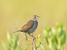 listbirds 591 best life list birds images on pinterest life list birds
