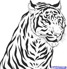 drawn tiger pencil and in color drawn tiger