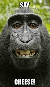 Funny Monkey Memes - funny monkey memes created by awesomeness via meme generator