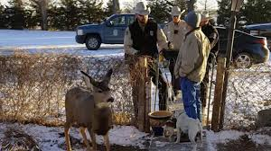 kansas family u0027s pet deer shot by game warden people com