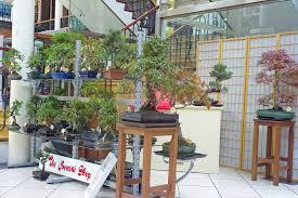 the bonsai shop powerscourt centrepowerscourt centre