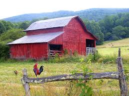 red barn and rooster photograph by duane mccullough