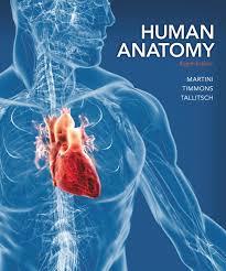 Human Anatomy And Physiology Marieb 7th Edition Heisler Hebert Chinn Krabbenhoft U0026 Malakhova Practice Anatomy