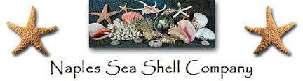 Where To Buy Seashells Seashells For Sale Seashell Decor Corals