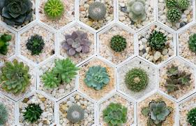 succulent savvy tips for every aspiring garden pro and not or