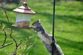 how to keep squirrels out of bird feeders simple solutions new