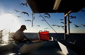 Louisiana travel alerts images Gulf narrows for louisiana shrimping industry wsj jpg