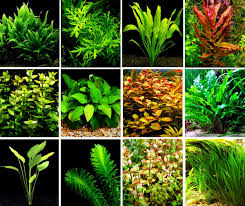 Aquascape Shop How To Create Your First Aquascape U2022 Aquascaping Love