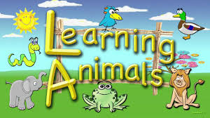 for toddlers learning animals an educational video for