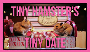 tiny hamster u0027s tiny date ep 5 youtube
