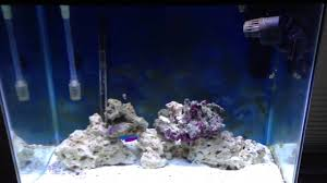 fluval led light 48 fluval sea full spectrum marine reef led aquarium light 2 youtube