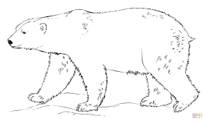 polar bear coloring pages popular polar animal coloring pages at