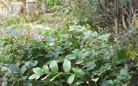 native plantings red hook garden liz campbell kelly