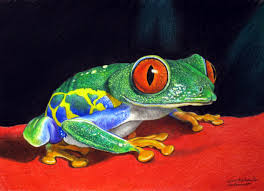 free lesson in how to draw realism of red eyed tree frog time