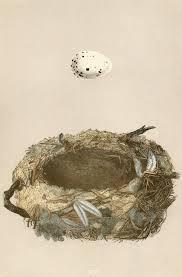 beautiful free high res 1800 u0027s birds nest art vintage fangirl