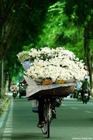Memory Foam Manrides 248 Best Transport Bike Images On Pinterest Transportation