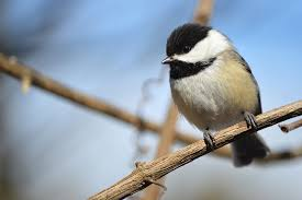 bird collisions birds at risk with or without bird feeders