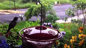 Jewel Box Window Hummingbird Feeder Aspects 153 Mini Feeder Youtube