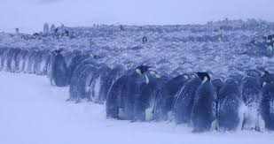 energy saving processes in huddling emperor penguins from