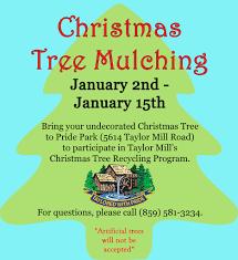 christmas tree mulching u003e city of taylor mill ky