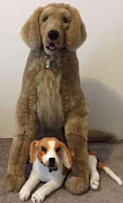 belgian sheepdog rescue trust facebook lost dogs illinois lost dogs illinois