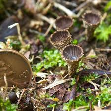 Types Of Garden Fungus - mushrooms of distant hill distant hill gardens