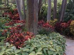 palm gardens 2
