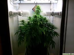 cfl grow light fixture cfl light fixture for growing light fixtures