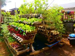 Container Garden Design Ideas Image Of Vegetable Container Garden Picture Gallery Of Backyard